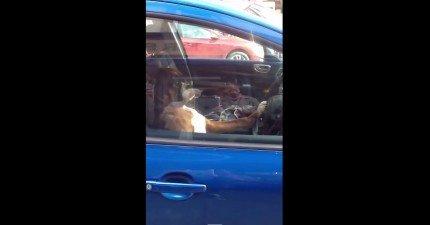 這隻狗狗超不爽主人把他關在車子裡。他接下來的行為讓行人全都圍過來...