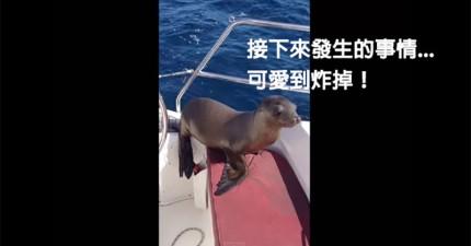 一開始我以為這隻小海獅只是來打個招呼,沒想到他...!