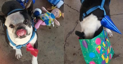 母女發現了一隻生命垂危流浪狗,她們在他臨終前做的事情讓人淚流滿面。