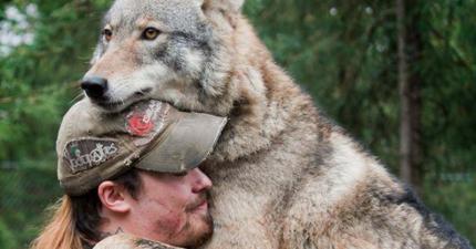 20張照片證明,這些你不敢接近的野生動物也很適合變成你的居家寵物喔。