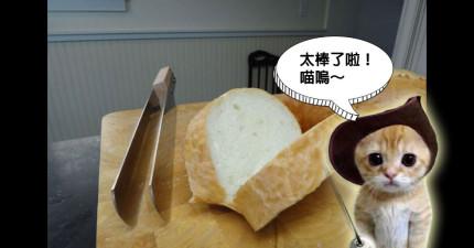 當你知道這把刀子的超能力後,你就會一天到晚不停的吃三明治!