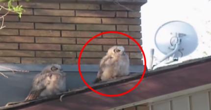 右邊那隻貓頭鷹在6秒的時候會做一件超邪惡的事情然後閃人...太可惡了!