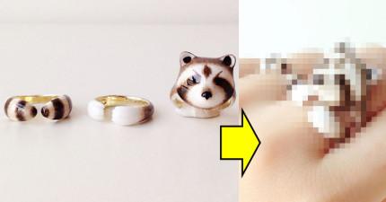 7款「只要三個全依順序戴上就會萌到讓你很崩潰」的超可愛動物戒指!