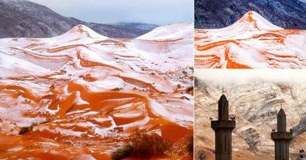 撒哈拉沙漠下雪了!37年首次「最不可能白色耶誕節」當地人嚇壞!(8張)