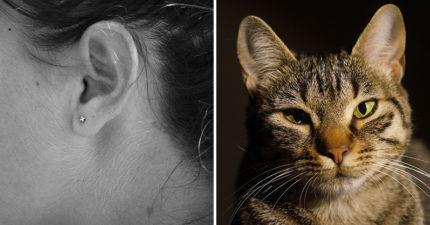 婦人跟「貓咪當床伴」耳朵卻越來越癢 醫生一照才發現「白色肥蟲」在裡面住爽爽...