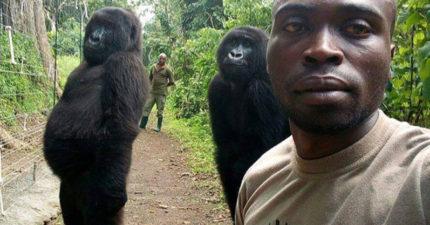 最會自拍的猩猩!動保意外拍下「帥氣偶像團體」驚艷美照 「超專業站姿」萌翻萬人:謝謝你們❤