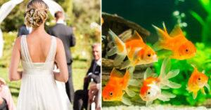 新娘想出的「婚禮小驚喜」不如預期 伴娘被迫處理「99條死金魚」...原因讓全網傻眼!