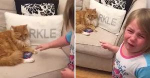 影 / 女孩跟貓咪上演「搶玩具大戰」 貓皇「勝利的表情」讓網笑瘋!