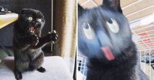 牠被封為「世界上最沒偶包的貓」推特爆紅 超醜「眼球分離術」讓網笑翻:這批真的很純!