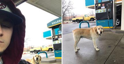 好心男發現「迷路狗狗」準備帶牠回家 卻驚見狗牌「超無奈控訴」讓他秒噴笑!