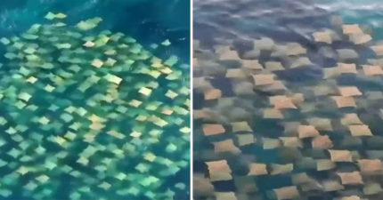 網分享「便條紙在海里游泳」影片引200萬點閱 近看卻讓人驚呼:真的會動!