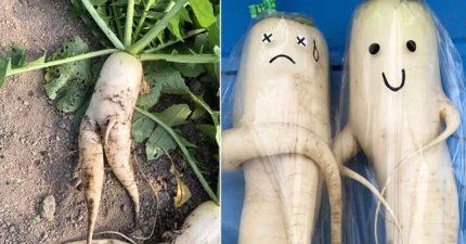 蘿蔔長太醜「全部賣不掉」農夫超心疼 他幫忙「加3筆」瞬間被搶光!