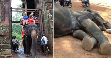 2象載遊客「累到倒地」從此沒醒來...社會終被喚醒 柬埔寨改新法:「禁騎大象」!