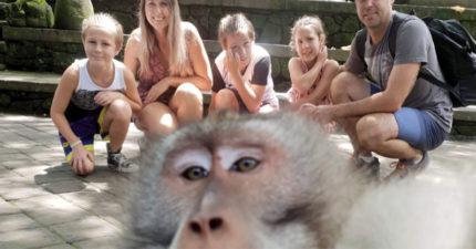 溫馨家庭照被「跩猴亂入」牠掌鏡一臉不屑 拍完比出「超兇手勢挑釁」網笑翻:撿到槍?