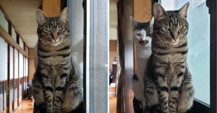 影/「貓咪有背後靈」驚悚畫面在網上瘋傳 他爆料:只要養2隻以上都會發生!
