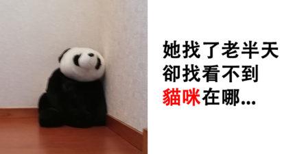 他回家「找不到貓」以為出門玩耍 結果被「角落的熊貓」曝光行蹤…18萬網友笑翻!