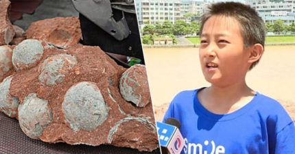 10歲男孩發現「詭異紋路」的圓形石頭 專家查證後嚇壞:確定是恐龍蛋化石!