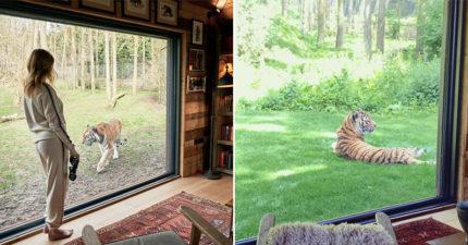 飯店推野生動物園「跟老虎過夜」超狂體驗 泡澡還有巨貓路過!