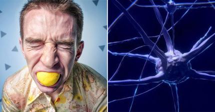 想吃東西時「可以控制食慾」的晶片!超邪惡「操作過程」想減肥的有救了