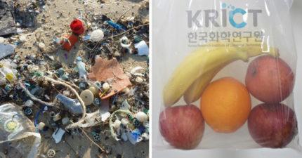 地球有救了?韓國科學家用「蟹殼」研發超堅固塑料 只要「6個月」就能全數分解!