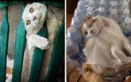 11張「蠢貓們最不想記得」的出糗時刻 太愛玩「被蜥蜴修理」的樣子全被紀錄!