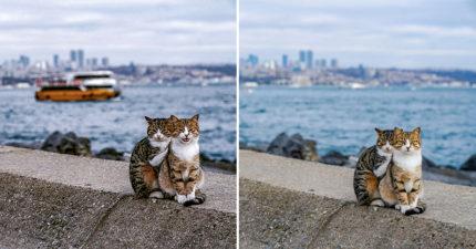 攝影師巧妙捕捉「浪貓緊緊依偎」模樣!超親人小貓闖入下午茶時間太可愛