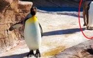 日人氣動物園「企鵝健康操」每早萌跳 網震驚:還有摩天輪!