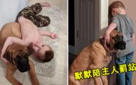 男孩做錯事被罰「面壁思過」 貼心大狗默默「陪罰站」畫面超溫馨!