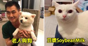 6個全台「超人氣寵物YouTuber」 工程師vs白貓甜到像夫妻❤