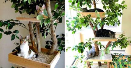 夫妻打造「貓咪專屬樹屋」 超實際設計「午睡床+貓抓板」貓奴瘋搶訂❤