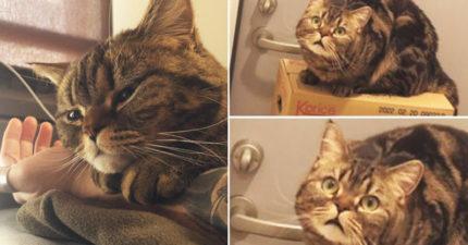 喵星人發現鏟屎官「偷吃貓糧」會有什麼反應?這隻貓貓噴出…世界級驚訝臉!