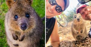 澳洲特產「最可愛心機婊」遇到危險「丟寶寶當武器」趁機逃走