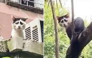 「永遠都在難過的貓」像活生生的表情符號!網友:你是不是欠抱