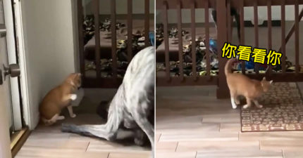 影/狗狗太煩!貓皇誘拐牠進籠「瞬間上鎖」動作超熟練
