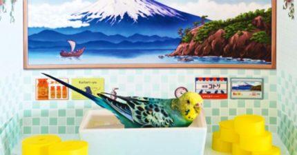 小型寵物專用「日式澡堂」獨享浴池泡澡畫面超可愛❤