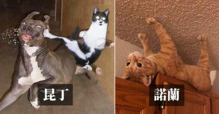 好萊塢名導配帥貓!21隻「適合加盟他們下一部片」的奇葩貓咪