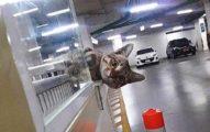 停車場「地縛貓」每天探頭收費 「不肯離開」真相太洋蔥QQ