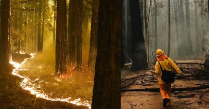 加州大火一星期「燒掉整個北台灣」!最老公園「百年歷史」變灰燼