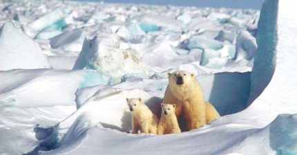 北極圈「狂飆21度」熱到荒唐...80年後「北極熊」恐滅絕