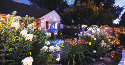 用8種「只在晚上盛開的花」打造月光花園 流星花聞起來「微辣」