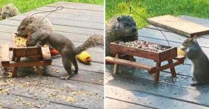 土撥鼠跟松鼠每天「偷揪吃早餐」 併桌狂嗑太可愛❤