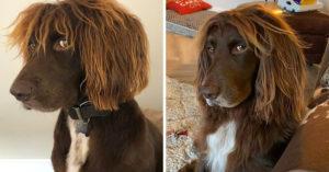 15隻「被上帝選過」的獨特動物 「史努比+貓王」混血狗狗!