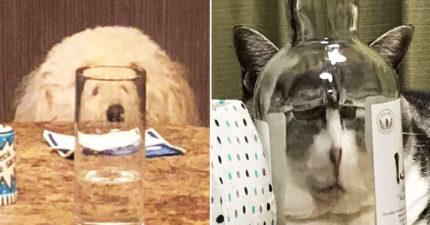 20隻「靠玻璃換張臉」的寵物戲精 貓皇「跟影帝撞臉」超爆笑!