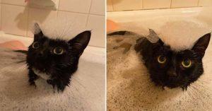 貓奴一輩子的夢想!貓皇「超愛泡澡」每天自動跳進浴缸一起洗