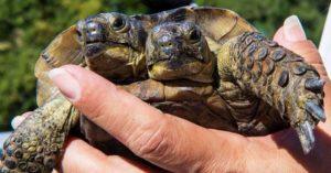 雙頭龜過「23歲生日」!兩張嘴一起吃大餐畫面太可愛❤