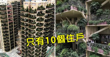 中國「森林建築」沒人住慘變「末日現場」 住戶:蚊子比人還多