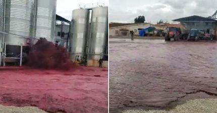 酒廠要哭了...5萬公升紅酒噴成「鮮紅大海」 網:不喝爆太浪費