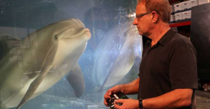 機械海豚誕生!超逼真「外型+結構」有望拯救全球動物