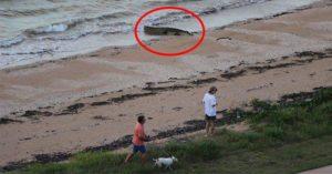 海灘遛狗驚見「鱷魚曬太陽」 當地人超淡定:跑來這很正常啦~