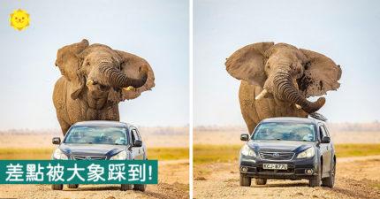 幾乎被踩!在國家公園開車 突然被「大象爆衝猛追」差點逃不掉
